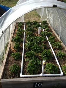 This Homemade Irrigation System Uses 1/2 Inch PVC Pipe Snapped Together  Without Glue